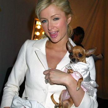 Jamie Johansson, Lady With a Dog by a paparazzo
