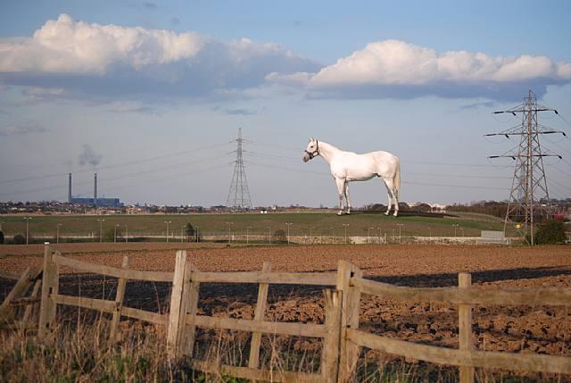 Mark Wallinger, White Horse, 2008