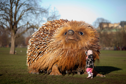 UKTV, 'Hedgehog,' 2014